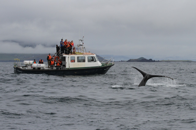Whales - Humpback, Fin, Minke, Porpoise and Killer Whales