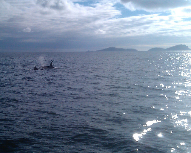 two orca off blaskets